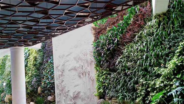 别墅垂直绿化