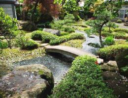 冬季花园植物考虑