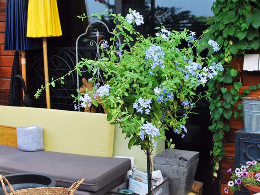 保利紫金山屋顶花园
