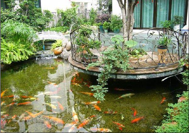 庭院水景养护服务