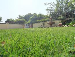 南京别墅庭院草坪的养护