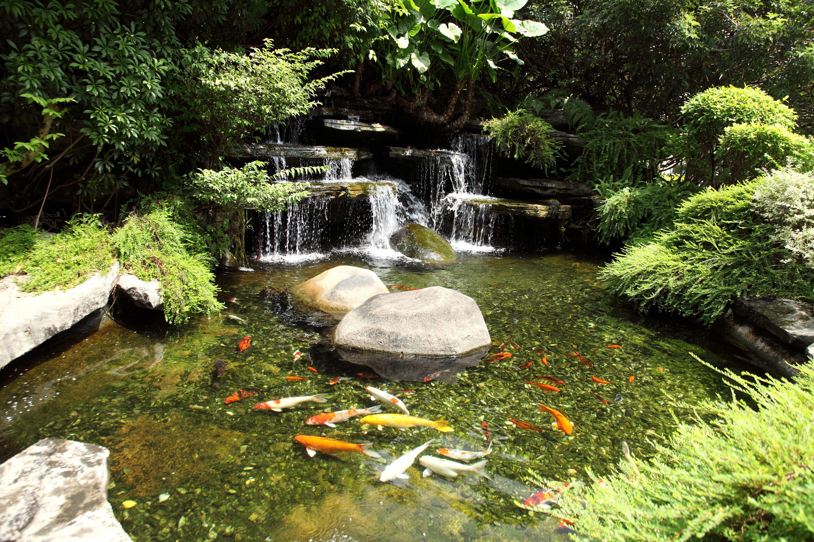 锦鲤鱼池生态系统